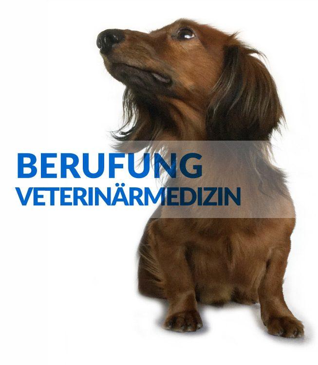 BERUFUNG-VETERINARMEDIZIN-Schulungen-ECM-Kurse
